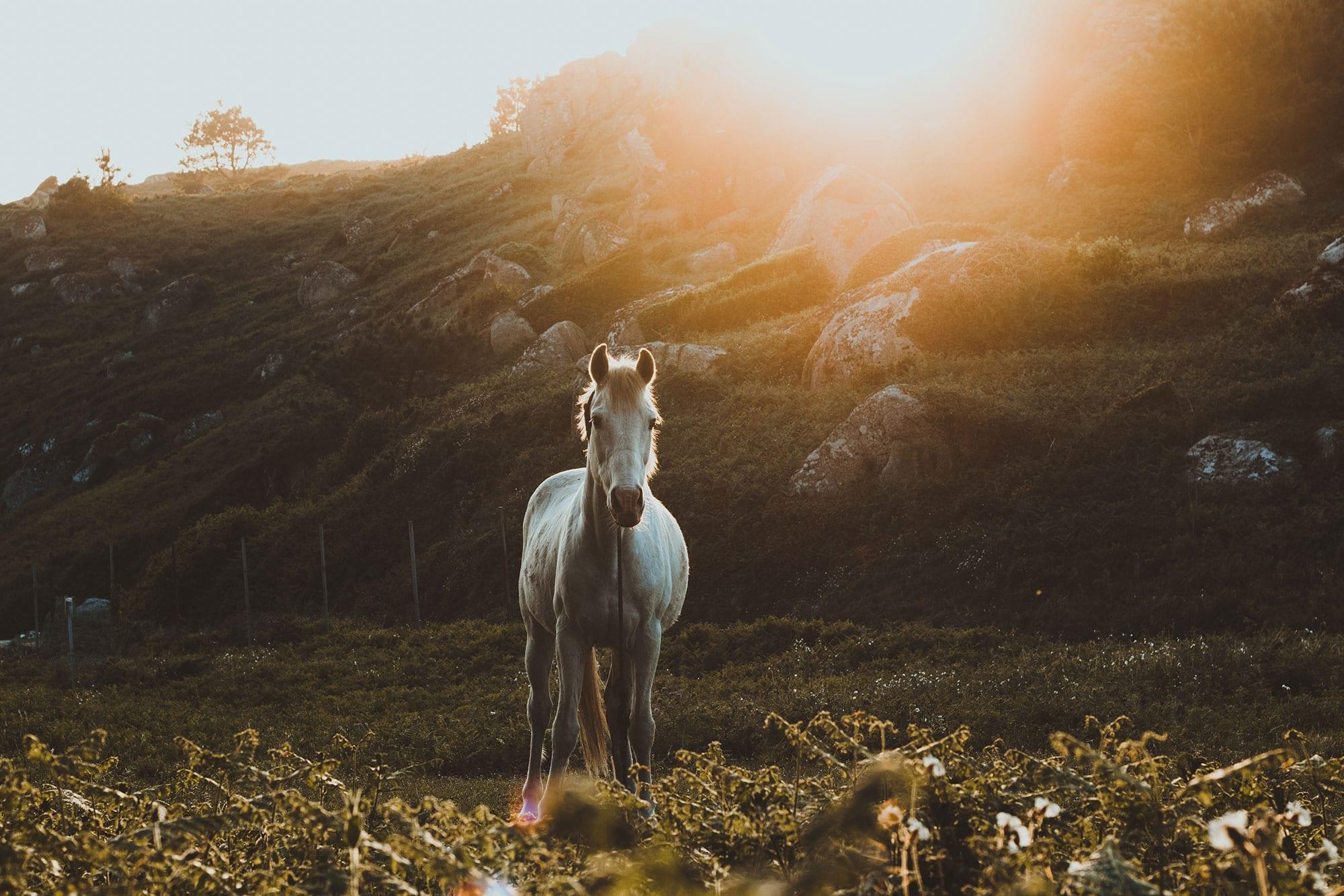 PARASITE CONTROL IN HORSES
